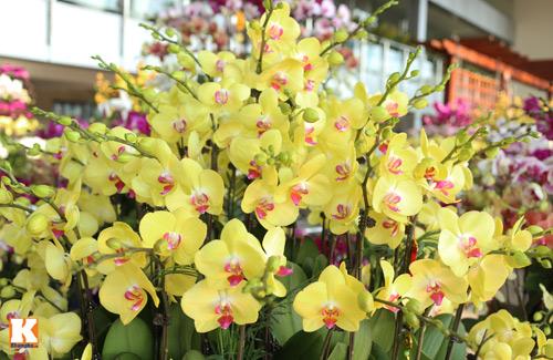 Nét đẹp khác biệt của hoa địa lan