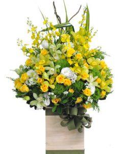 Mùa vàng hoa sinh nhật