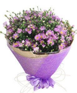 Thạch thảo tím hoa sinh nhật