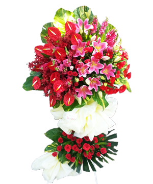 Vươn cao 2 hoa chúc mừng