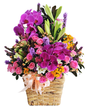 Nhánh lan rừng hoa sinh nhật