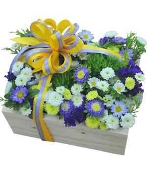 tình thơ hoa sinh nhật