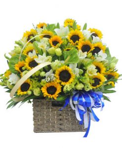 Nắng vàng hoa sinh nhật