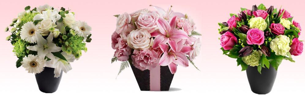 Hoa LiLy đẹp
