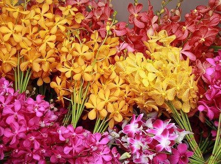 Vẻ đẹp tiềm ẩn của hoa lan mokara