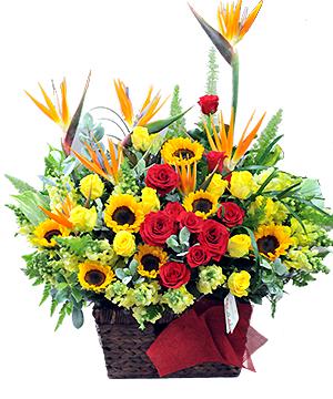 hoa sinh nhật vfl002