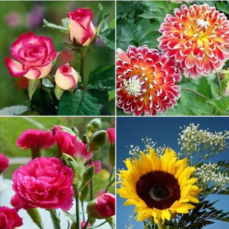 Shop hoa tươi tại quận 3 – Vietflower nơi bạn đặt trọn niềm tin